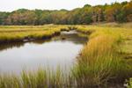 Salt Marsh in Late Summer/Early Fall, off Kickamuit River, Audubon of Rhode Island Wildlife Sanctuary, Warren, RI