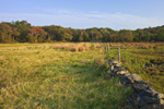 Dairy Farm Pasture with Stone Wall Meets Salt Marsh along Kickamuit River, Warren, RI