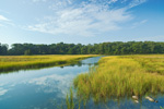 Salt Marsh View from Audubon of Rhode Island Wildlife Sanctuary, Kickamuit River, Warren, RI