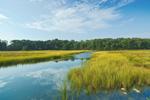 Salt Marsh View from Audubon of Rhode Island Wildlife Sanctuary, Kickamuit River, Warren, RI