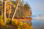 Early Morning Fog and Golden Light along Shoreline of Lake Dennison in Fall, Lake Dennison Recreational Area, Birch Hill Wildlife Management Area, Winchendon, MA
