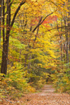 Country Road in Fall, Quabbin Reservation, New Salem, MA