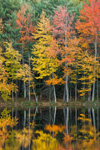 Trees with Fall Foliage Reflecting in Still Waters of Horseshoe Pond, Fitzwilliam, NH