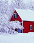 Snow-draped Trees with Red Barn after Fresh Snowfall, Fitzwilliam, NH