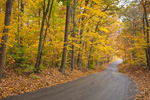 Country Road through Hardwood Forest in Fall, Coventry, RI