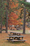 Picnic Area in Fall in Hopeville Pond State Park, Griswold, CT