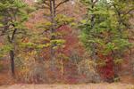Forest along Edge of Leatherleaf Bog, Arcadia Wildlife Management Area, Exeter, RI