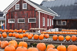 Red Barn and Pumpkins at the North Hatfield Pumpkin Company in Fall, Village of North Hatfield, Hatfield, MA
