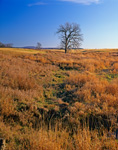 Mixed Wetlands and Meadow in Early Winter, Addison, VT