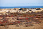 View of Salt Meadow, Wetlands, Dunes and Ocean from Small's Swamp Trail, Pilgrim Heights, Cape Cod National Seashore, Truro, MA,