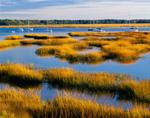 Salt Marsh and Sailboats, Beaufort River, Beaufort, SC