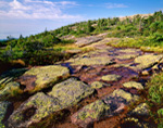 Lichen-covered Granite on Cadillac Mountain, Acadia National Park, Bar Harbor, ME