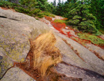 Sunburnt Grasses and Granite Rocks on Canada Cliff Trail, Beech Mountain, Acadia National Park, Southwest Harbor, ME