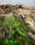Tidal Pool and Rocks along Maine Coast, Prouts Neck Bird Sanctuary, Scarborough, ME