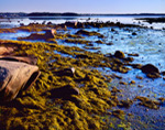 Tidal Zone at Low Tide along Maine Coast at Alley Bay, Beals Island, ME