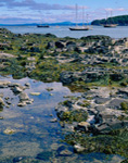 Tidal Pool with Sailboats in Bar Harbor in Background, Mt Desert Island, Bar Harbor, ME