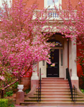 Flowering Cherry Tree and Stairway at Entrance to Residence on Cook Street, Providence, RI