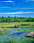 Wetlands with Mt. Katahdin and Baxter State Park in Background, Great North Woods, T2R9, ME