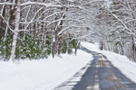 Country Road in Quabbin Park after Snowstorm, Quabbin Reservation, Ware, MA