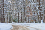 Country Road through White Pine Forest after Winter Storm, Quabbin Reservation, Hardwick, MA