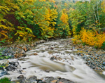 Fall Foliage and Cold River after Heavy Rains, Berkshire Mountains, Savoy Mountain State Forest, Savoy, MA