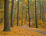 Country Road through Quaddick State Park in Autumn, Thompson, CT