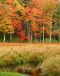 Marsh and Woods along Lawrence Brook in Fall, Royalston, MA