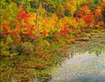 Lake Rohunta Shoreline in Fall, Orange and Athol, MA