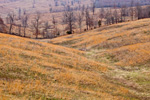 Colorful Grasses and Rolling Hills in the Ozark Mountains, Searcy County, AR