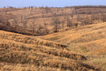 Colorul Grasses on Rolling Hills in the Ozark Mountains, Searcy County, AR