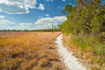 Florida National Scenic Trail at Hopkins Prairie, Ocala National Forest, Marion County, FL