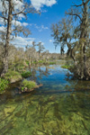 View of Wakulla River in Spring, Wakulla County, FL