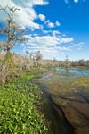 View of Wakulla River in Spring, Wakulla County, FL