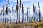 Smoke through Trees, Old Snags and Marsh during Prescribed Burn, St Marks National Wildlife Refuge, Gulf Coast, Florida Panhandle, Gulf of Mexico, Wakulla County, FL