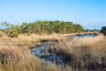 Marsh with Palm and Pine Trees, St Marks National Wildlife Refuge, Gulf Coast, Florida Panhandle, Gulf of Mexico, Wakulla County, FL