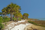 Palm Trees and Beach on Shoreline of Apalachee Bay, St Marks National Wildlife Refuge, Gulf Coast, Florida Panhandle, Gulf of Mexico, Wakulla County, FL