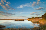Pool and Marshes in Early Evening Light, St Marks National Wildlife Refuge, Gulf Coast, Florida Panhandle, Gulf of Mexico, Wakulla County, FL