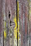 Close-up Detail of Lichens on Cedar Log Barn at Parker Hickman Farmstead HIstoric District, Buffalo National River, near Erbie, Ozark Mountains, Newton County, AR