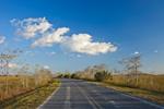 Road through Dwarf Cypress (Pond Cypress) and Wetland Prairie in Pa-hay-okee Area, Everglades National Park, FL