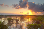 Red Mangroves and Spike Rush in Wetland Prairie at Sunrise, Everglades National Park, FL