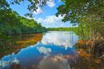 View of Coot Bay Pond through Red Mangrove Trees, Everglades National Park, FL