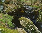 Falls Brook on Metacomet-Monadnock Trail, New England National Scenic Trail, Royalston, MA