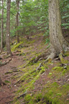 Metacomet-Monadnock Trail through Hemlock Forest along Falls Brook, New England National Scenic Trail, Richmond, NH