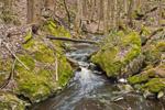 Falls Brook along Metacomet-Monadnock Trail, New England National Scenic Trail, Richmond, NH