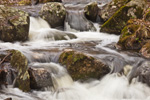 Series of Small Waterfalls on Gulf Brook in Spring Freshet, Athol, MA