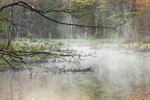 Early Morning Ground Fog on Beaver Brook, Royalston, MA