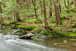 Lawrence Brook and Hemlock Forest below Doane's Falls, Trustees of Reservations, Royalston, MA
