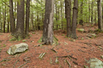 Hemlock Forest at Doane's Falls, Trustees of Reservations, Royalston, MA