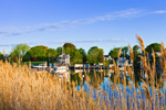 View of Patchogue River through Marsh Reeds, Duck Island Roads, Westbrook, CT