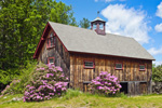 Barn with Natural Wood Siding in Spring with Rhododendrons in Full Bloom, Fitzwilliam, NH